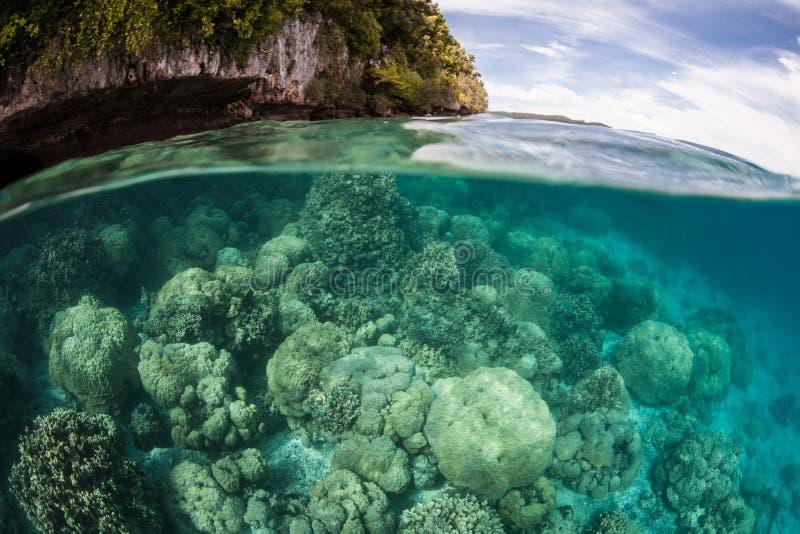 Harde Koralen in Lagune stock afbeelding