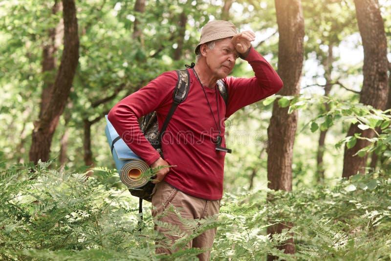 Harde, moeilijke, vermoeiende en uitputtende expeditie van oudere mannen in het wild bos, met hoofdpijn, met hand op voorhoofd stock afbeeldingen