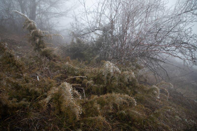 Harde rijp, het bevroren landschap van het installatiessprookjesland Mist en Mistachtergrond, bevroren bladeren en bloemen stock afbeeldingen
