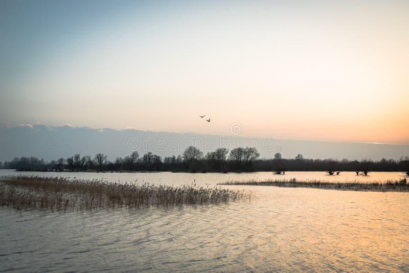 Hardinxveld, Países Baixos - 2018-01-14: Por do sol pastel sobre as zona sujeitas a inundações do rio Boven Merwede imagens de stock royalty free