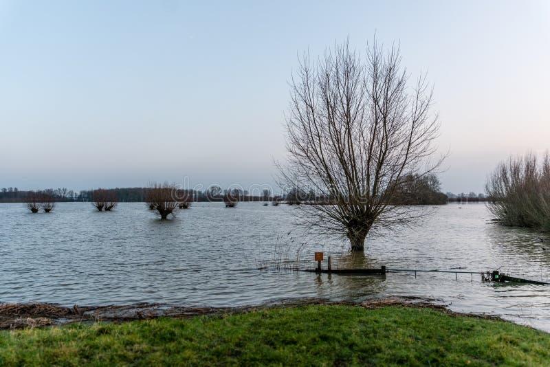 Hardinxveld, Pays-Bas - 2018-01-14 : Porte et saules noués image stock