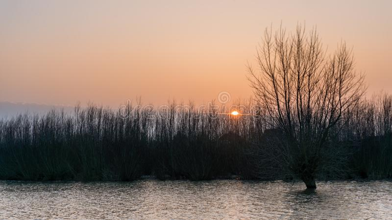 Hardinxveld, Pays-Bas - 2018-01-14 : saule et taillis noués dans les caps en crue de rivière au coucher du soleil image stock