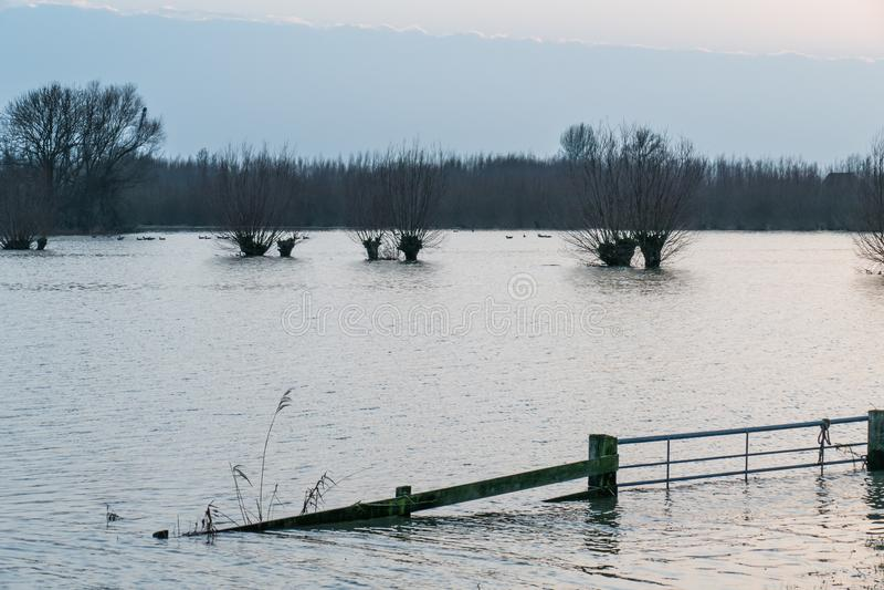 Hardinxveld, Pays-Bas - 2018-01-14 : Saules de porte et d'arbre étêté dans les zones inondables de la rivière Boven Merwede images libres de droits