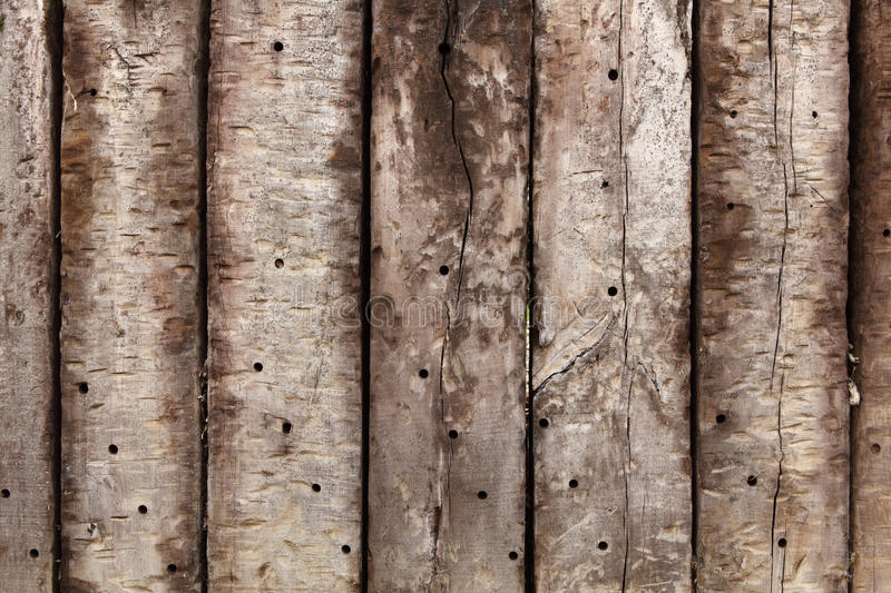 Download Hardwood stock photo. Image of ancient, poling, beam - 17393564