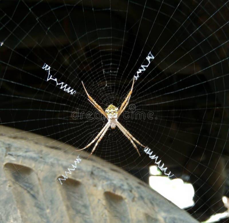 Hardworker pająk obrazy stock