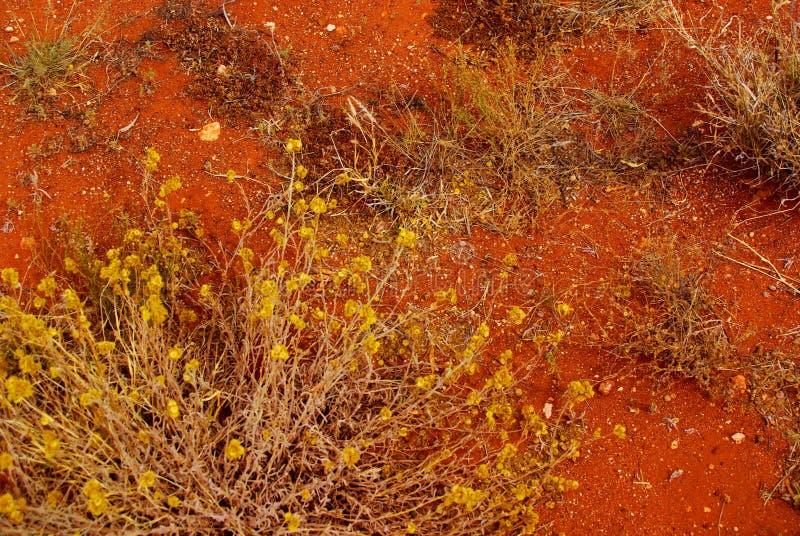 Hardy Life in un deserto duro fotografia stock