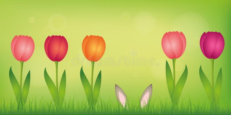 Hareöron döljer i gräsmattan mellan färgrika tulpan på grön vårbakgrund vektor illustrationer
