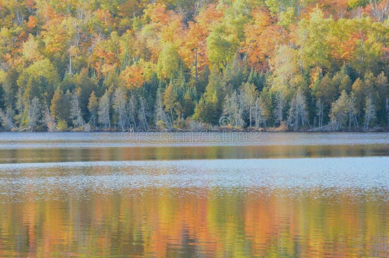 Hare湖反射-优越国家森林 图库摄影
