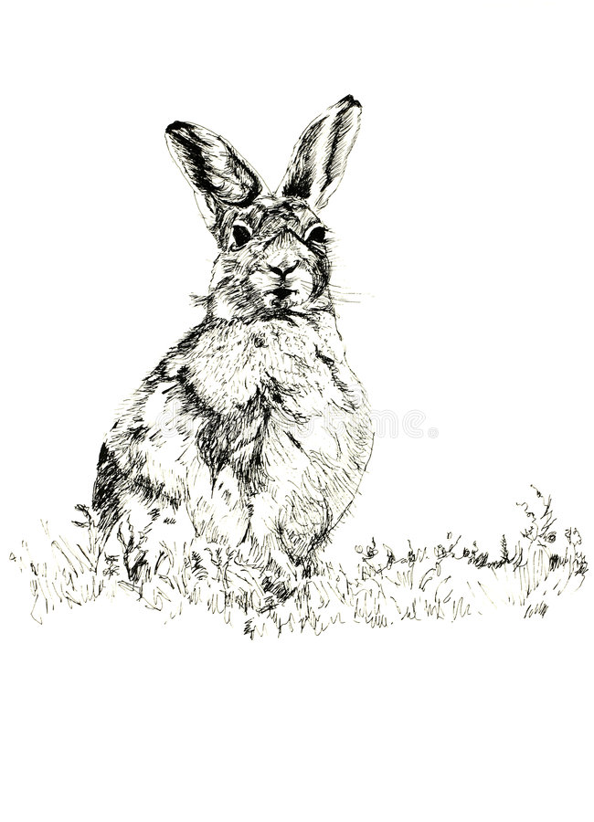 Download Hare stock illustrationer. Illustration av illustration - 507533