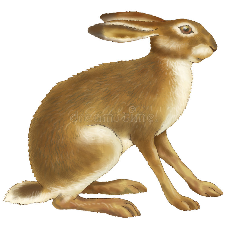Download Hare stock illustration. Image of raster, chase, hare - 5580907