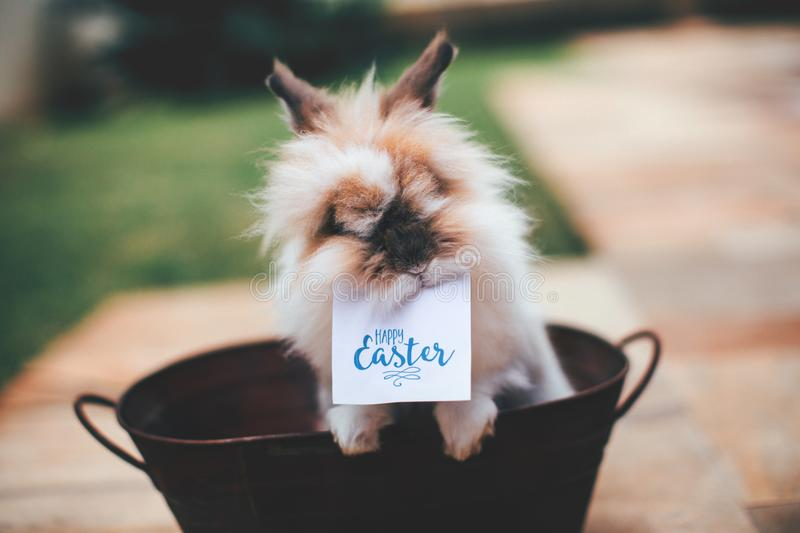 Hare on Basket With Happy Easter Card on Mouth stock image