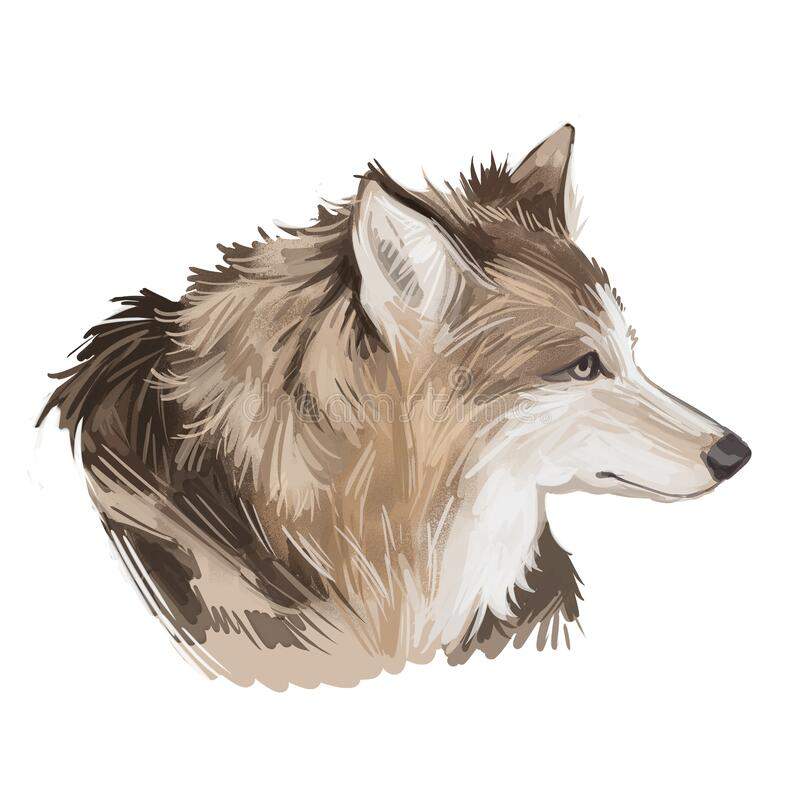 Hare Indian dog extinct domesticated canine breed of domestic dog, coydog, or domesticated coyote. Canada or American dog hand. Drawn portrait, digital art vector illustration