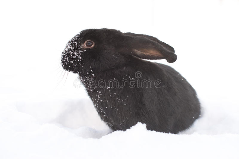 Hare in winter stock photography