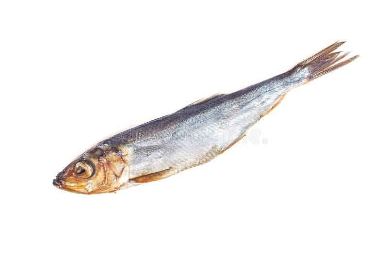 Harengs baltiques de poissons fumés d'isolement sur le fond blanc photo libre de droits