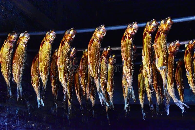 Harengs fumés d'anguille de poissons photographie stock libre de droits
