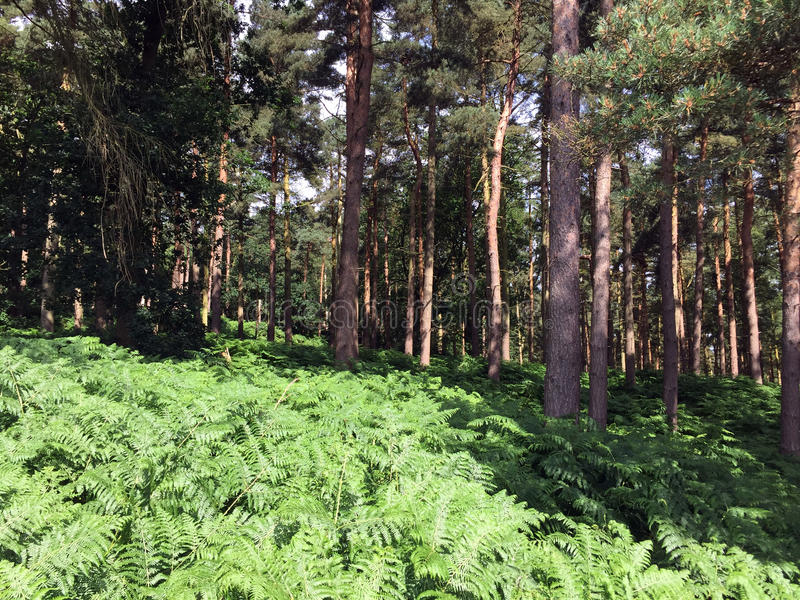 Harewood North Yorkshire Forest stock photography