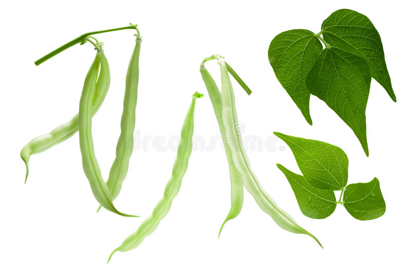 Haricot beans Phaseolus vulgaris, pods, leaves, paths. Hanging haricot bean Phaseolus vulgaris pods with leaves. Clipping paths for each object stock image