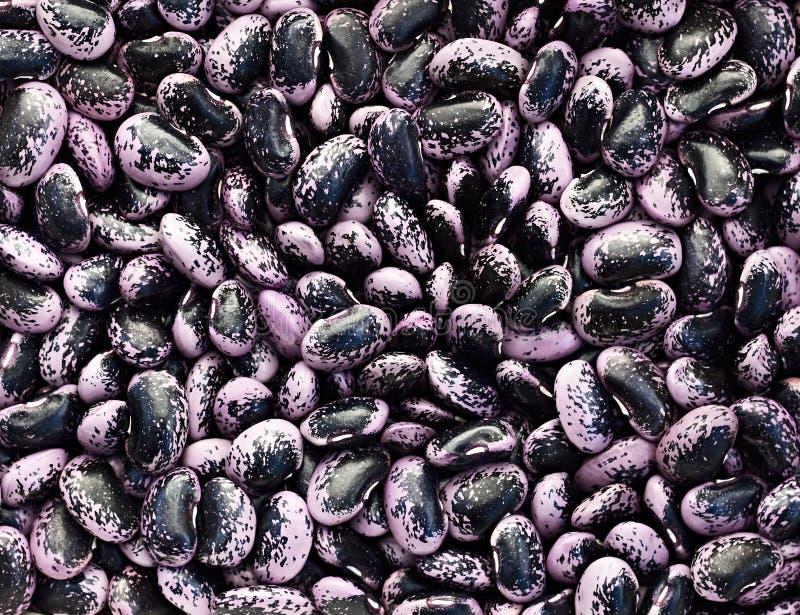 Haricot, cynaderki fasole deseniować z purpurową i czarną tło teksturą fotografia royalty free
