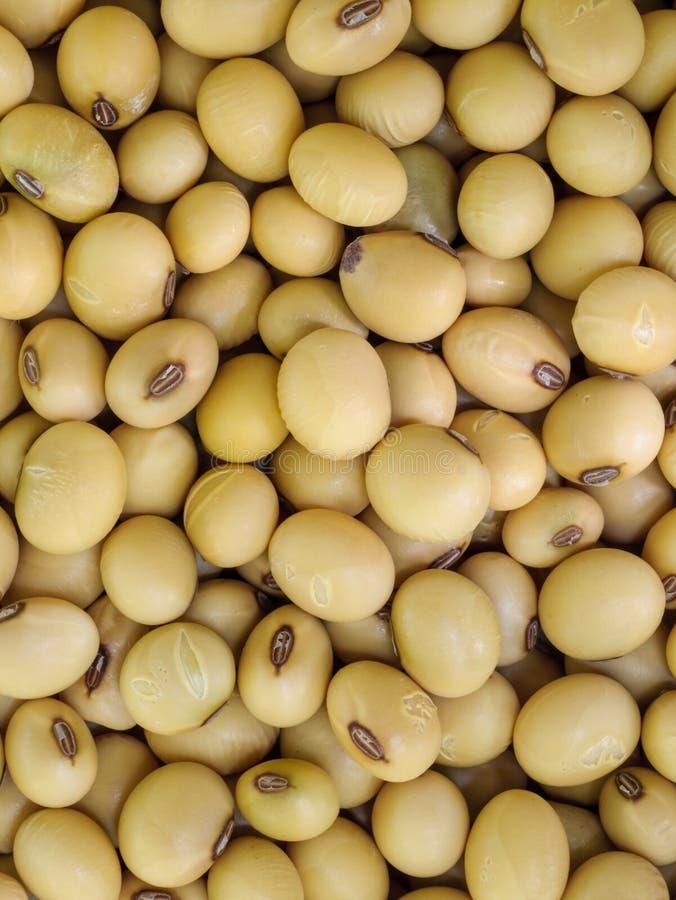 Haricot de soja. photographie stock