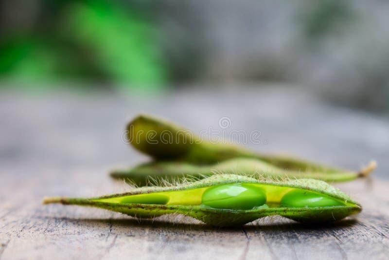 Haricot vert de soja photographie stock