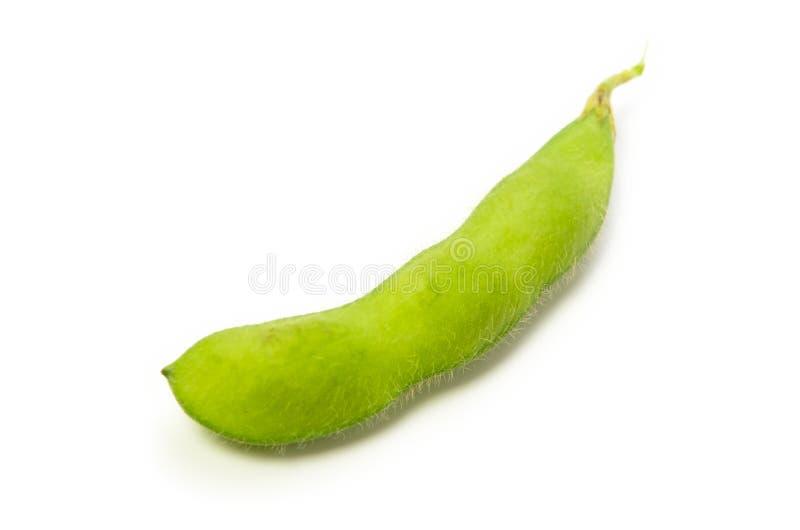 Haricot vert de soja photos libres de droits