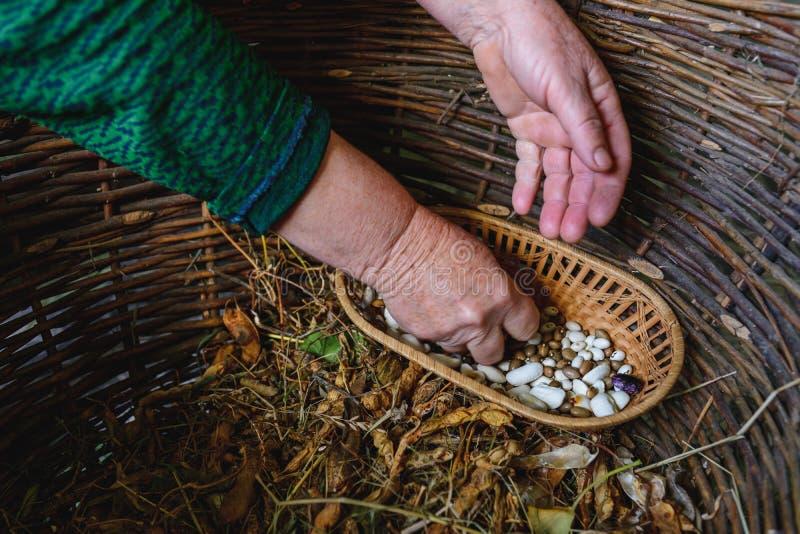 Haricots blancs dans le panier ? vendre au march? photo libre de droits