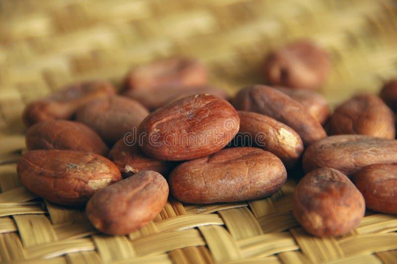 Haricots crus de cacao photo stock