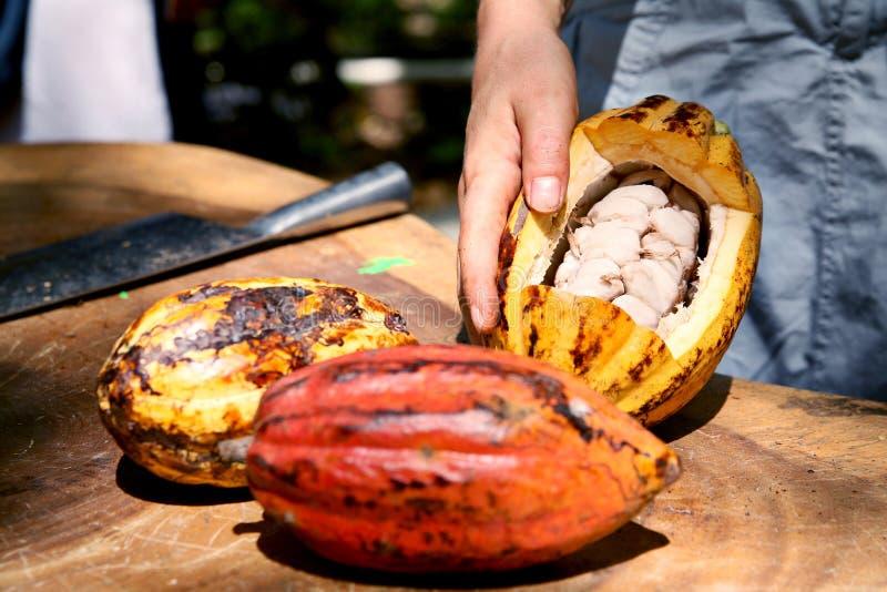 Haricots de cacao image stock
