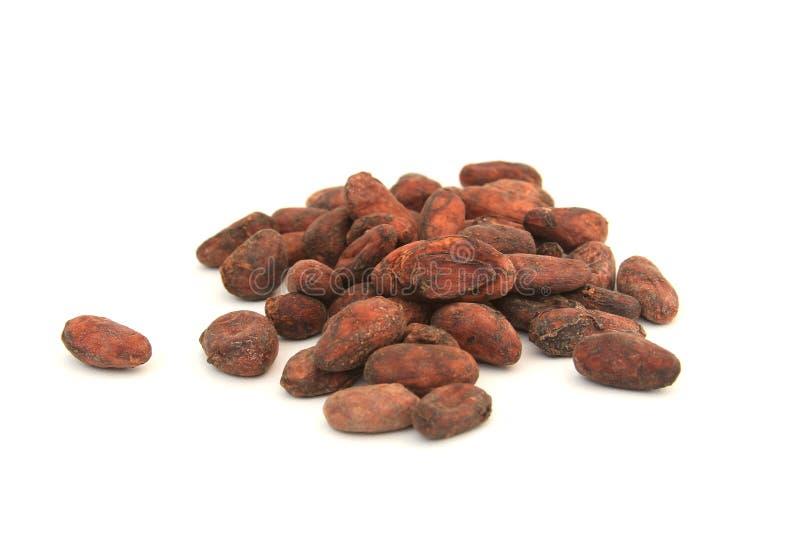 Haricots de cacao images libres de droits