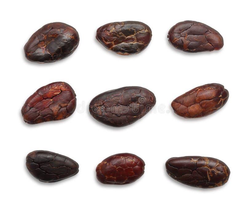 Haricots de cacao d'isolement images libres de droits