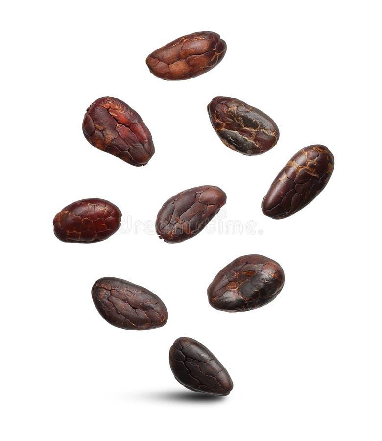 Haricots de cacao d'isolement image stock