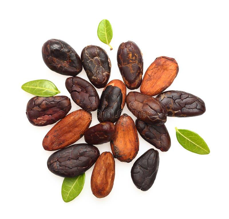 Haricots de cacao d'isolement image libre de droits
