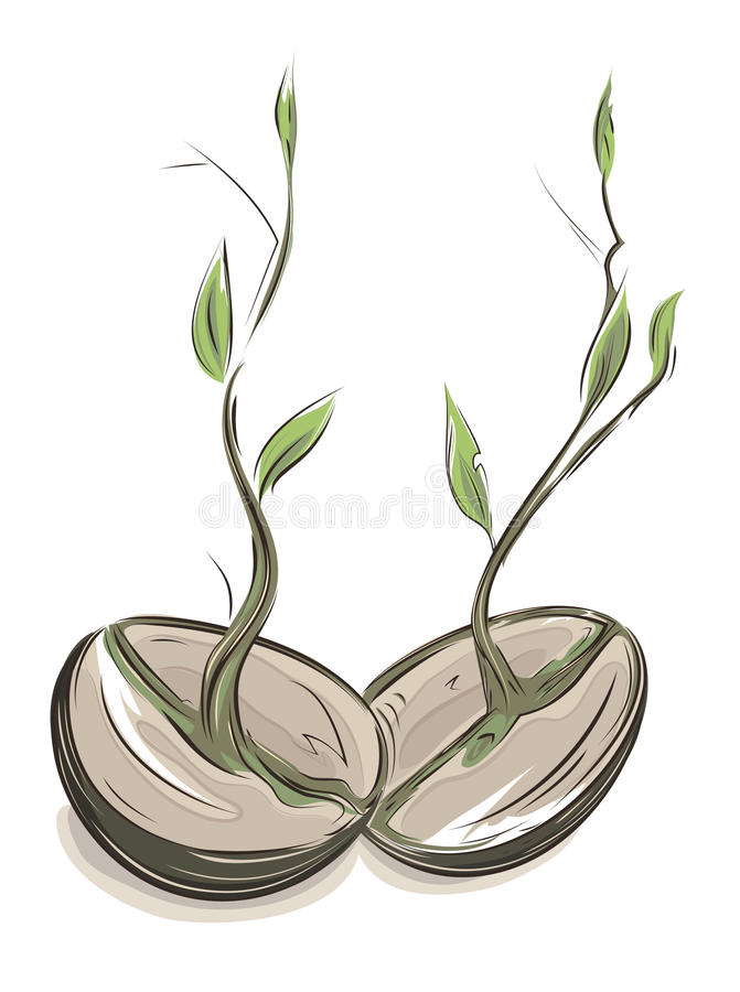 Haricots de germination illustration de vecteur