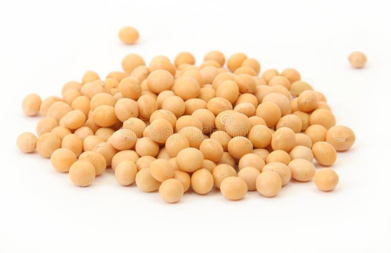 Haricots de soja photographie stock libre de droits