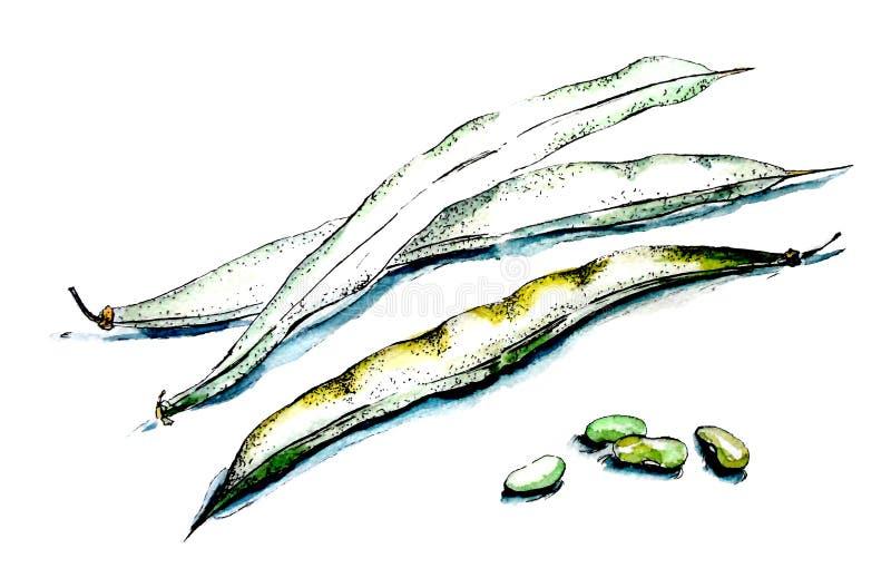 Haricots frais illustration de vecteur
