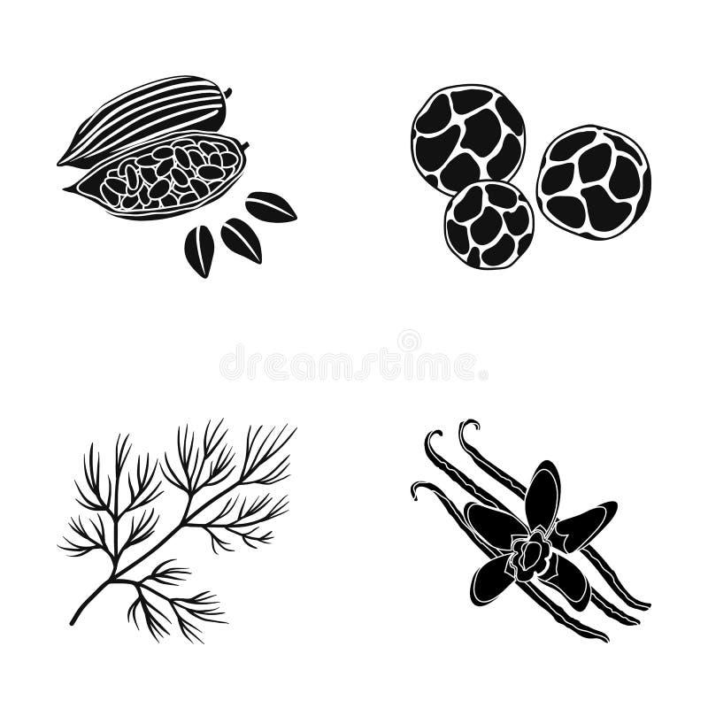 Haricots frits de cacao, aneth, poivre noir, vanille Les herbes et les épices ont placé des icônes de collection en stock noir de illustration libre de droits