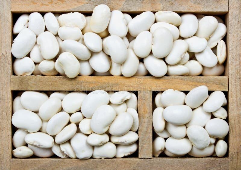 Haricots nains blancs photos libres de droits