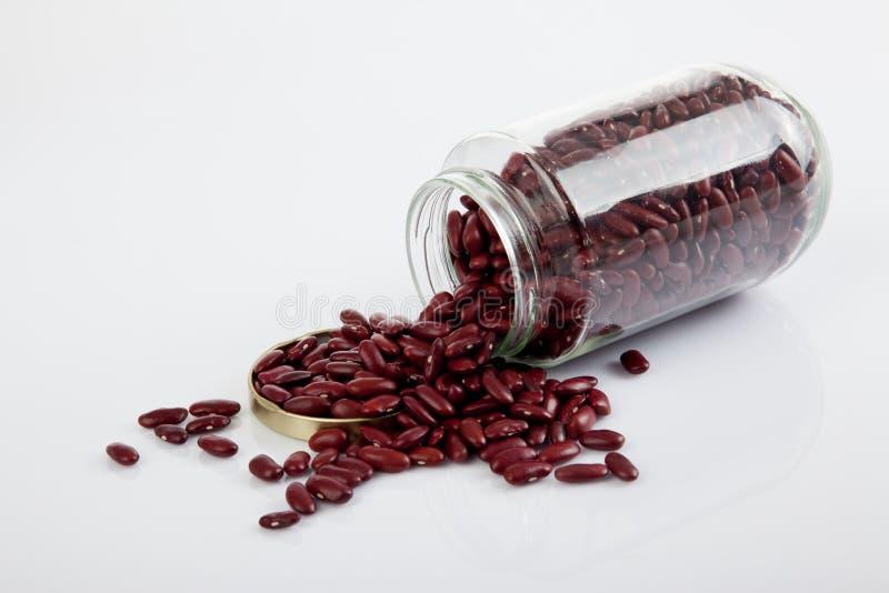 Haricots nains rouges avec le pot ouvert de couvercle images libres de droits