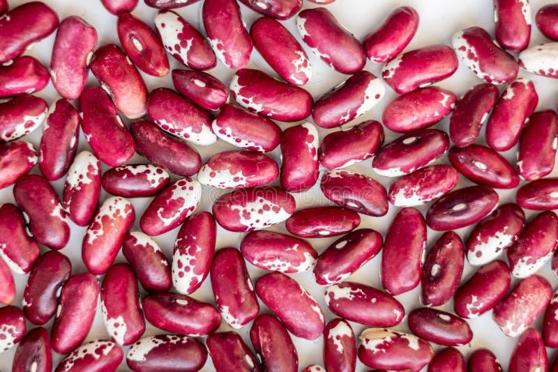 Haricots rouge foncé avec les points blancs Food_ utile photos libres de droits