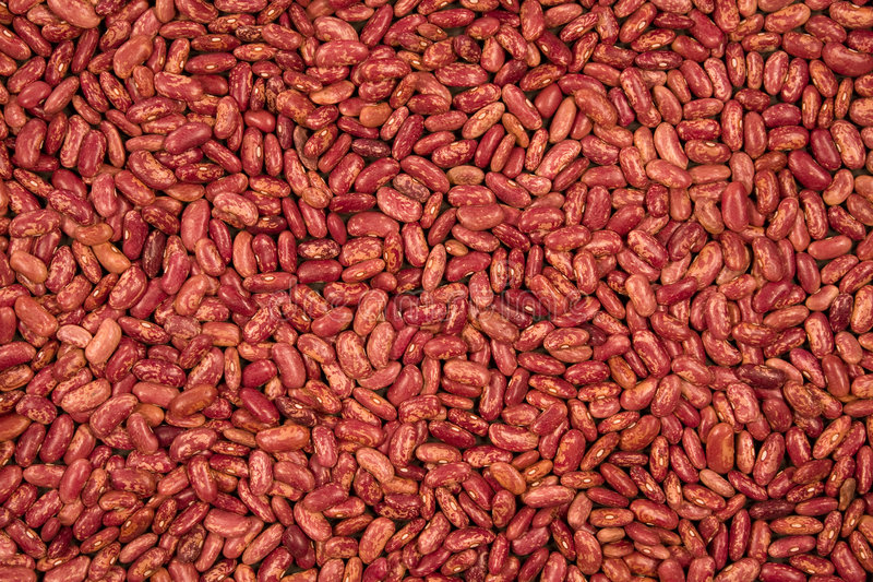 Haricots rouges image stock