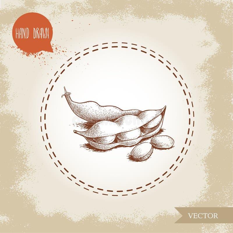 Haricots verts d'edamame tiré par la main de croquis Composition en illustration de soja d'isolement sur le vieux fond Nourriture illustration libre de droits