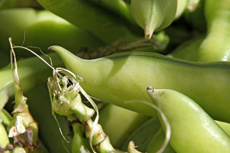 Haricots verts frais images libres de droits