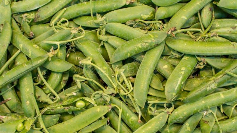 Haricots verts organiques sains sur le marché image stock