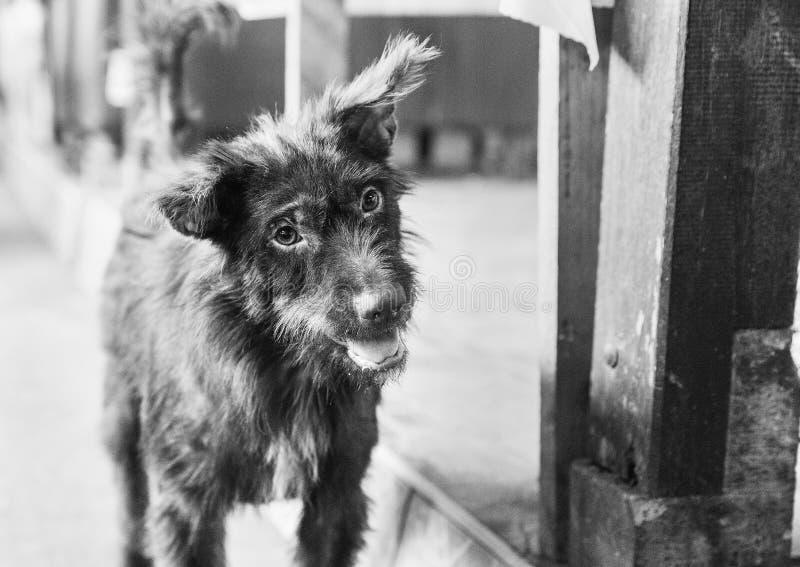 Harig puppy op tsreet royalty-vrije stock fotografie