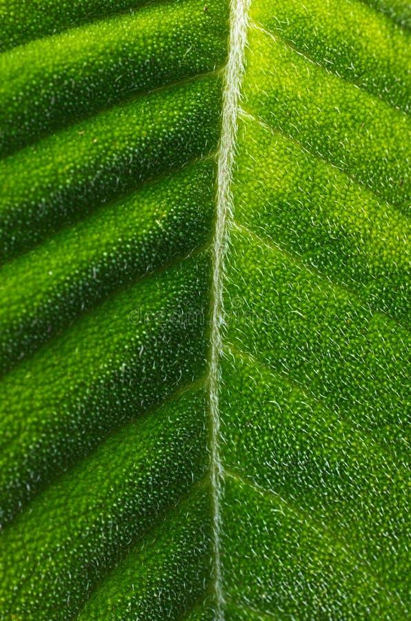 Harig Tropisch Blad stock foto's