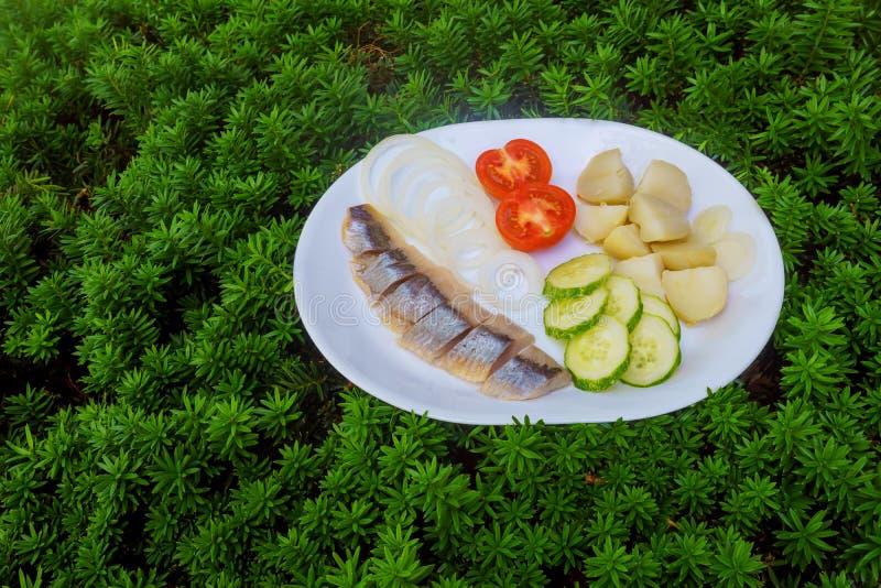 haringensalade met groenten op witte plaat hoogste mening stock afbeelding