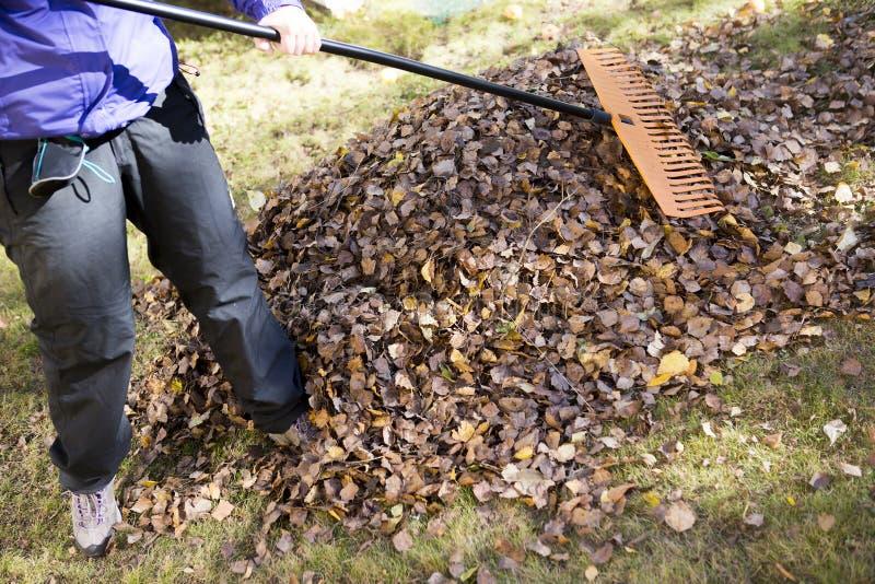 Harken von Blättern im Herbst lizenzfreies stockbild