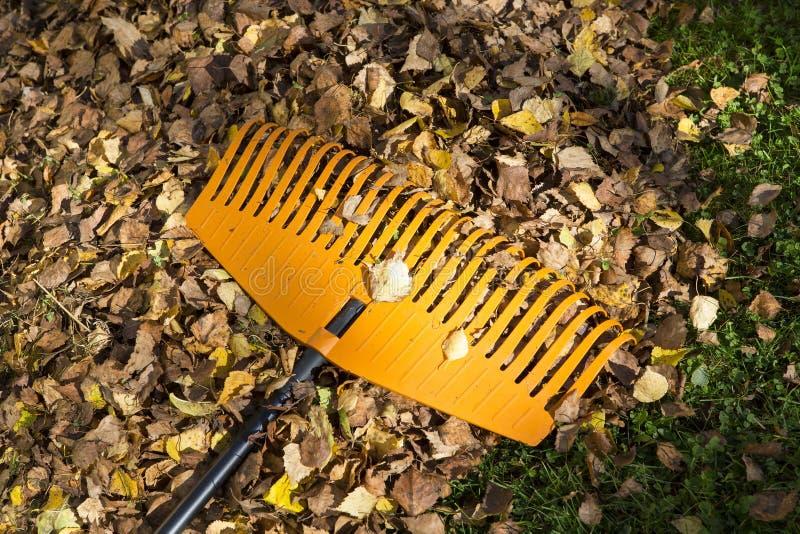 Harken von Blättern im Herbst stockfotos