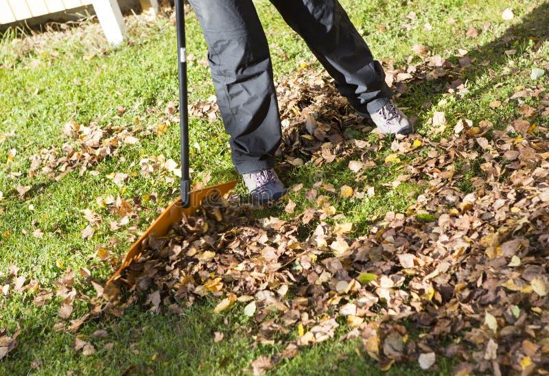Harken von Blättern im Herbst lizenzfreie stockbilder