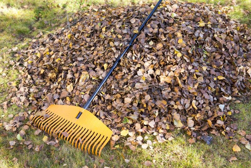 Harken von Blättern im Herbst stockbilder